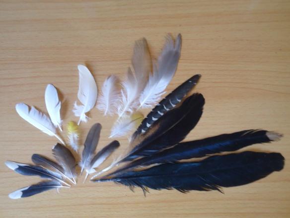 18 lông chim