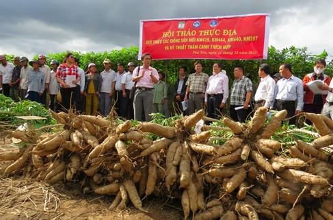 KM419 o Phu Yen