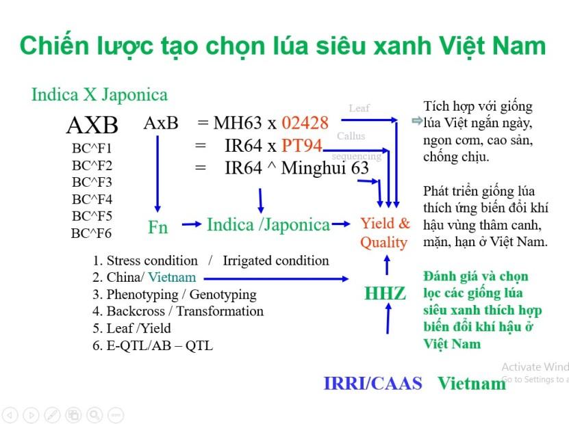 Chien luoc chon tao lua sieu xanh Vietnam