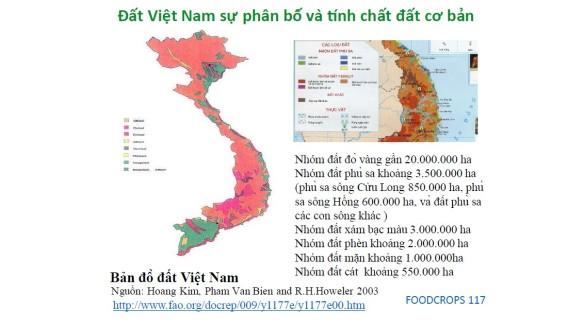 datvietnam