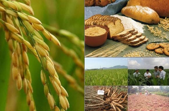 Food Crops News 295