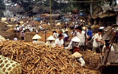 Cassava and Vietnam Now and Then 109