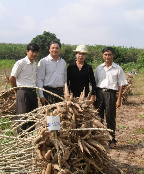 Cassava and Vietnam Now and Then 81