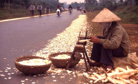 Cassava and Vietnam Now and Then 86