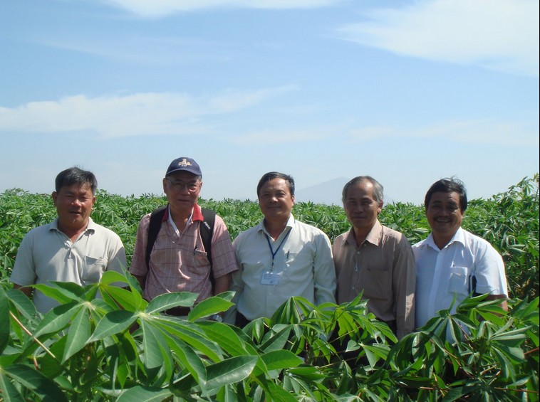 Cassava and Vietnam Now and Then 94