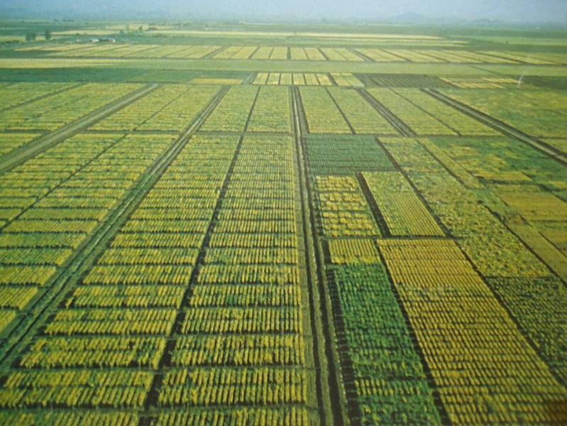 Norman Borlaug nha khoa hoc xanh 5