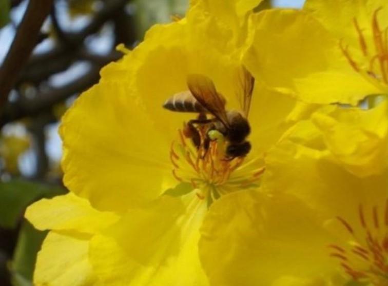 Hình ảnh này không có thuộc tính alt; tên tập tin này là hoa-va-ong.jpg