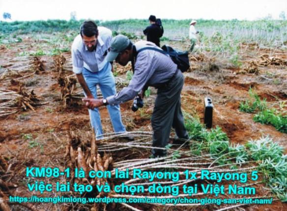 Hình ảnh này không có thuộc tính alt; tên tập tin này là km98-1-cassava-breeding-in-viet-nam-1.jpg